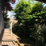 House-MS-03 樹木調査